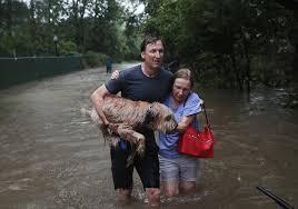 Hurricane Harvey Victims support - dogsandcatscastle